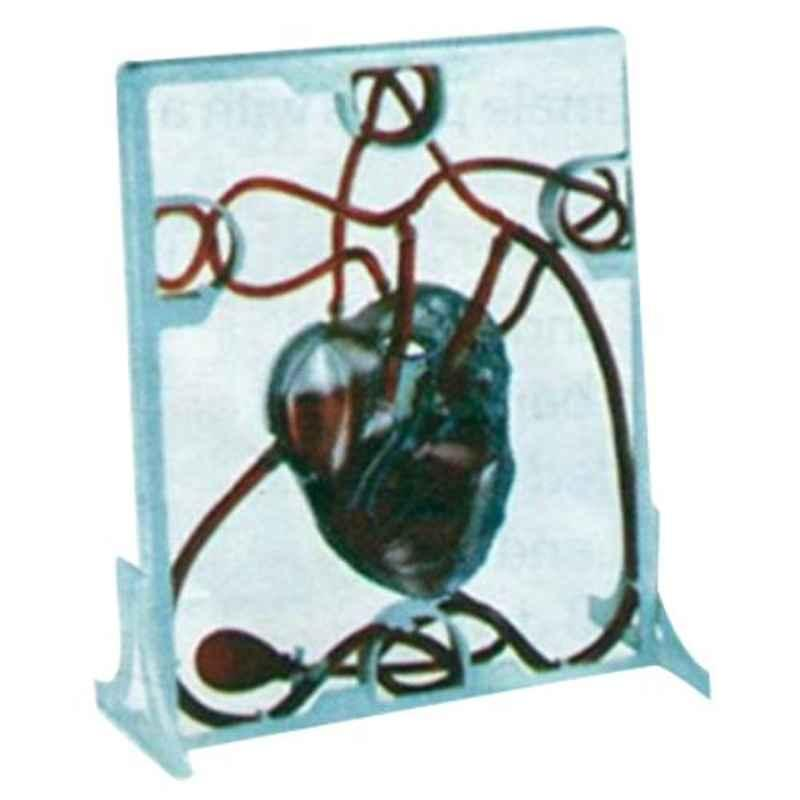 Skybound Mk019 Plastic Pumping A 3-D Working Heart Model with Clear Chambers